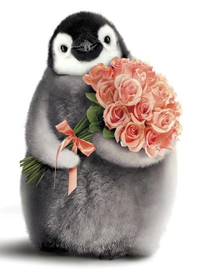 Bébé Pingouin Avec Bouquet Joyeux Anniversaire Archambault