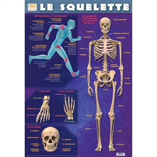 Squelette(Le)